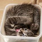 Аватар Котик в пластмассовой коробке