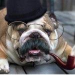 Аватар Пес в очках, шляпе и с трубкой в пасти