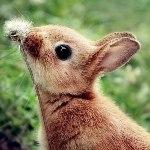 Аватар Маленький кролик нюхает одуванчик