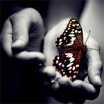 Аватар Бабочка сидит на ладони