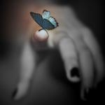 Аватар Бабочка сидит на пальце