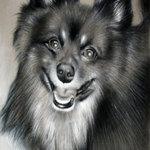 Аватар Жизнерадостная улыбка лохматой собаки
