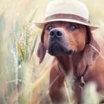 Аватар Пес в шляпе, ву Hannah Meinhardt