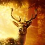 Аватар Олень на фоне природы, by kuschelirmel