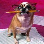 Аватар Пес с карандашом и в очках
